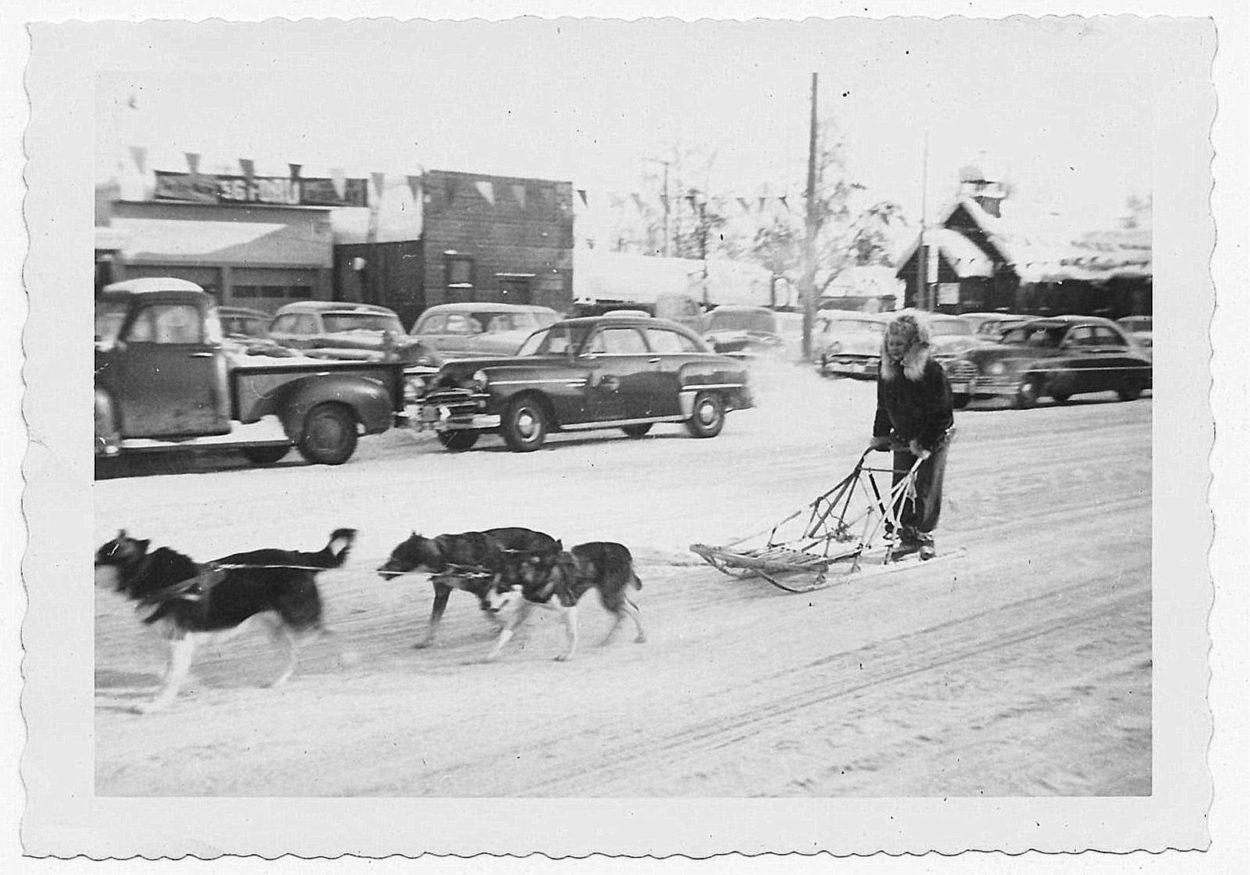 sled dogs downtown